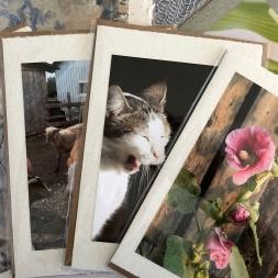 Cartes photo rectangulaires sur papier artisanal